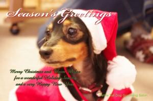 dog_card1
